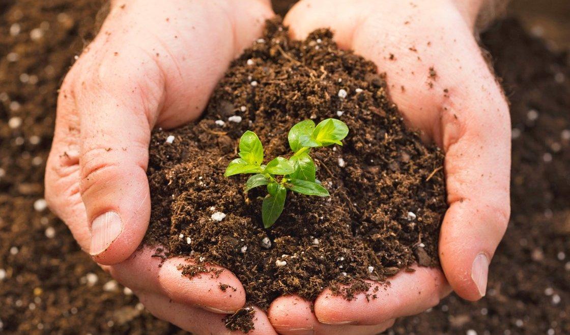 Seed & Soil