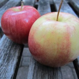 Local Honeycrisp Apples