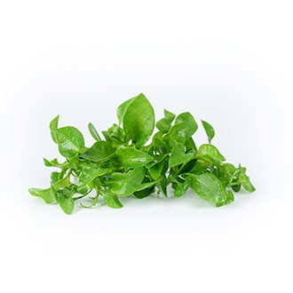Hydroponic Watercress
